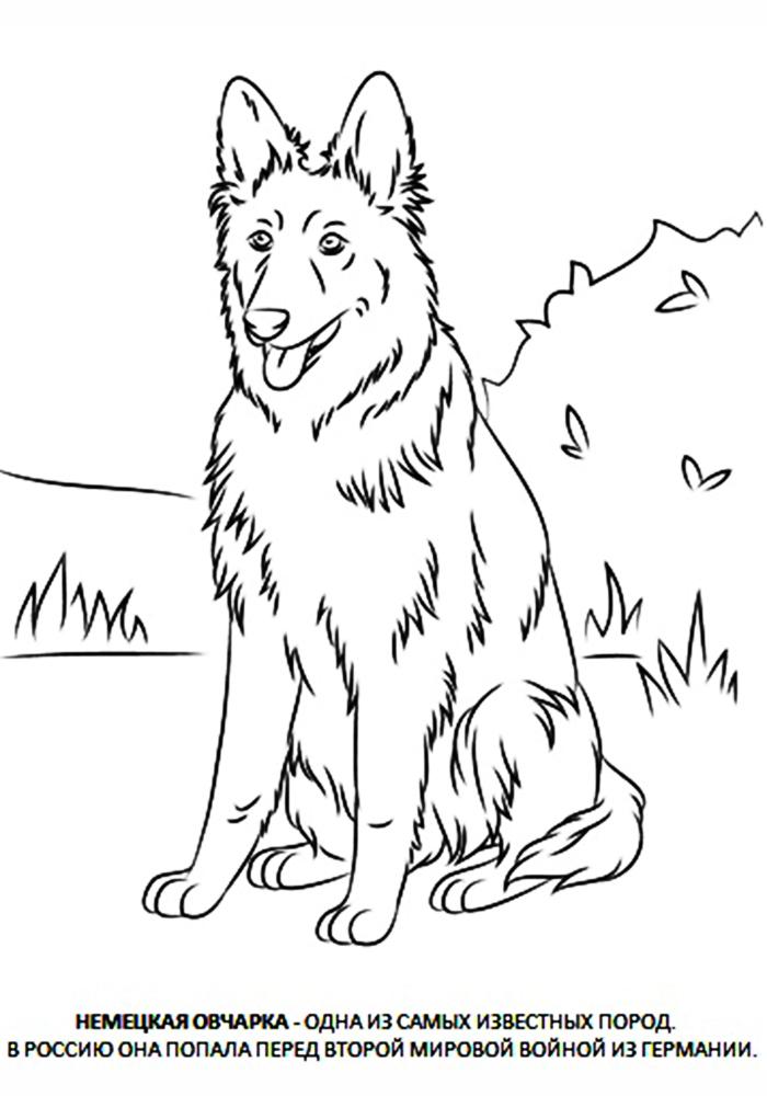 собака раскраска раскраска собаки и кошки