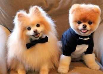 какие бывают виды собак