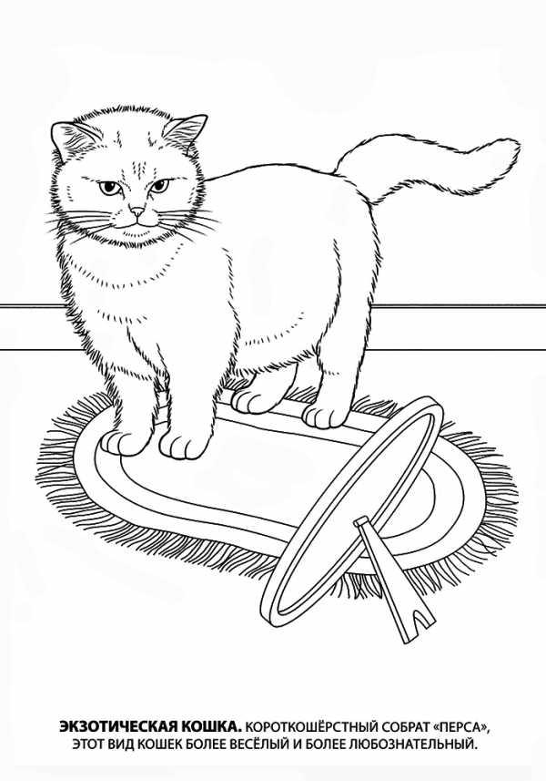 кошка собака раскраска детские раскраски распечатать скачать