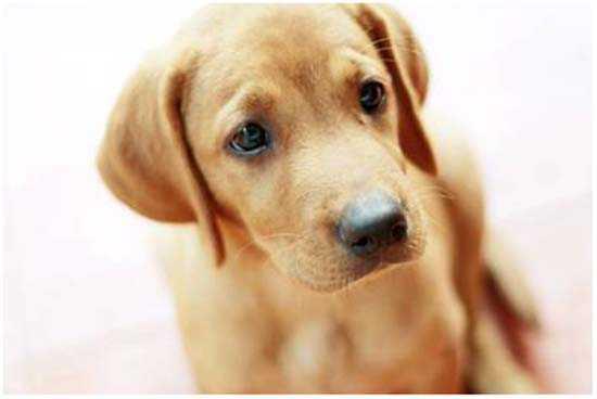 длительная течка у собаки