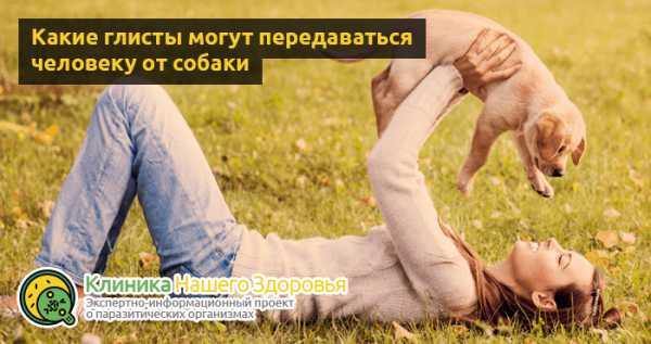 у собаки глисты что пить человеку