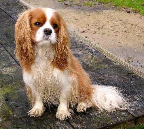 порода собак из фильма елки лохматые
