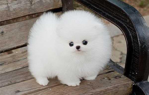 какая самая милая порода собак
