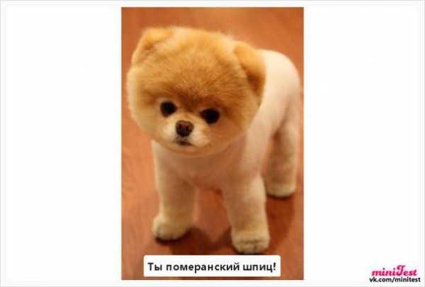 фото собаки ивангая