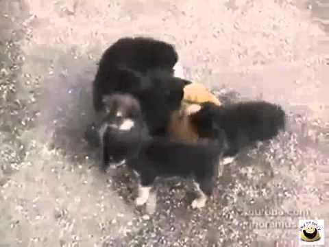 Собака загрызла кошку. К чему снится собака загрызла кошку