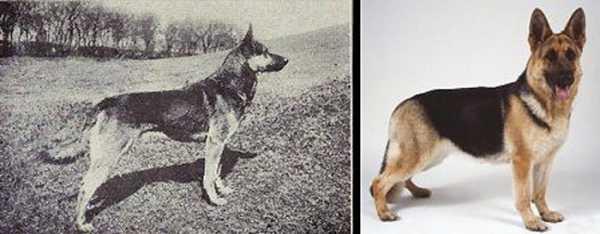Дисплазия тазобедренных суставов у собак a b c d e фиксатор голеностопного сустава летний период
