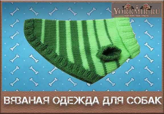 вязаная одежда для собак своими руками выкройки для тепла и уюта